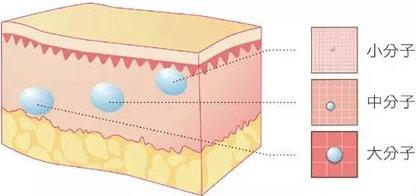 什么是玻尿酸